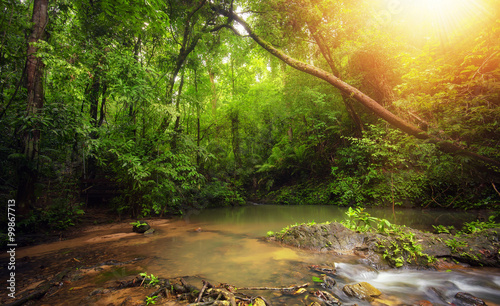 Inside in rainforest jungle with tropical plants and sun light shines through leaves and tree branches