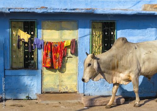 Canvas Print India Rajasthan Jodhpur. Blue city street life photography