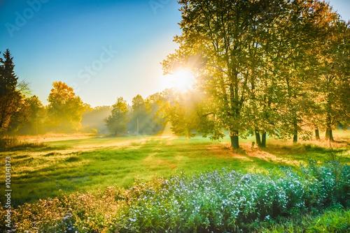 Fototapeta ray of sunshine through the tree