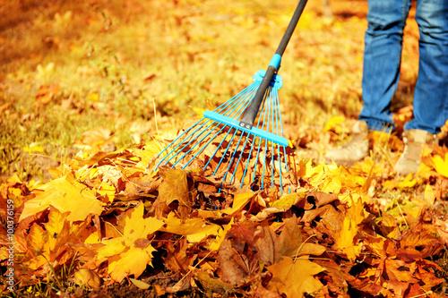 Fotografie, Obraz Raking fall leaves with rake