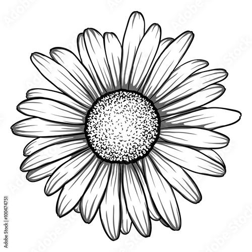 beautiful monochrome, black and white daisy flower isolated. Fototapet