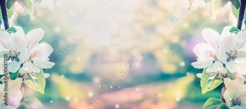 Fotografiet Spring blossom over blurred nature background with sunshine, banner