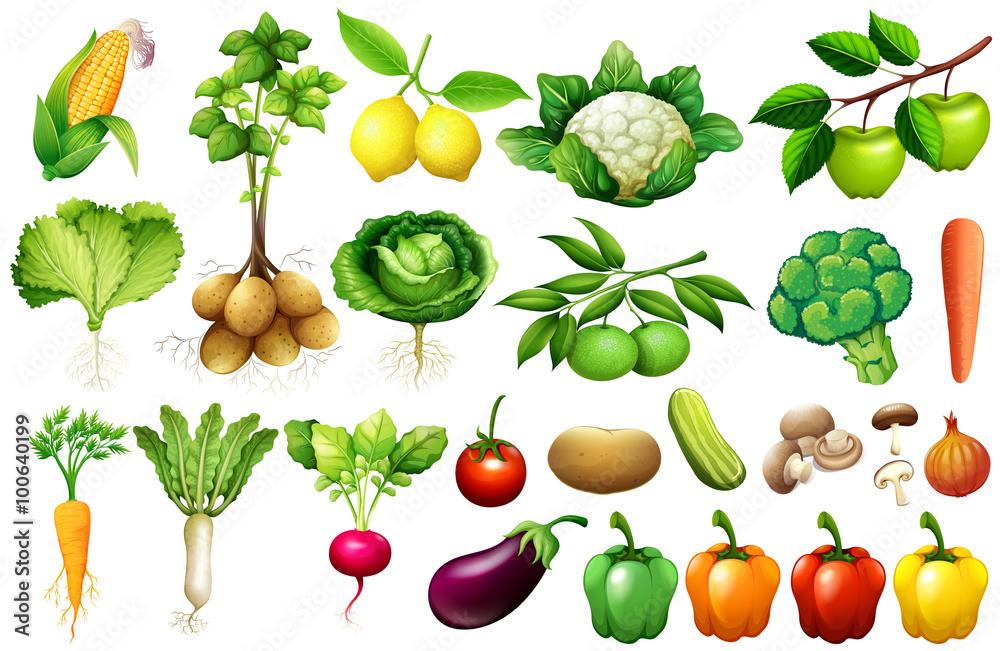 Różne rodzaje warzyw <span>plik: #100640199   autor: blueringmedia</span>