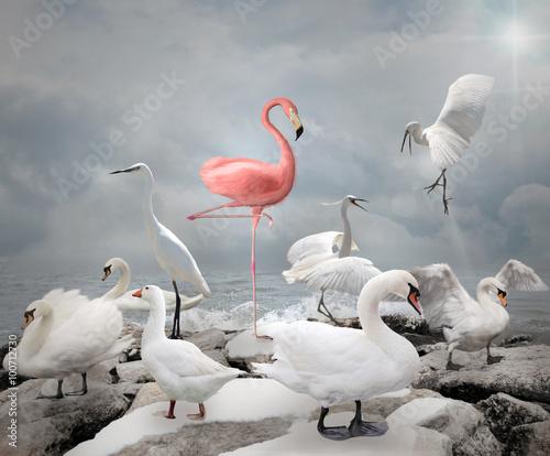 Fototapeta premium Wyróżnij się z tłumu - Flamingo i białe ptaki