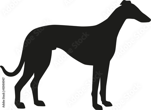 Canvastavla Greyhound silhouette