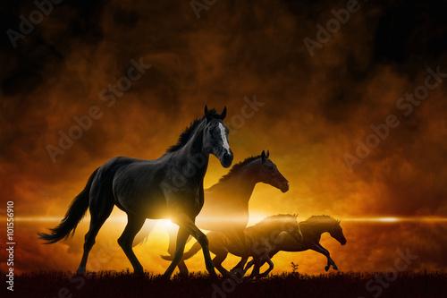 Canvas Print Four running black horses