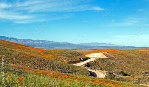 Fotografia California Golden Poppies along a remote dirt road in the high desert hills of A