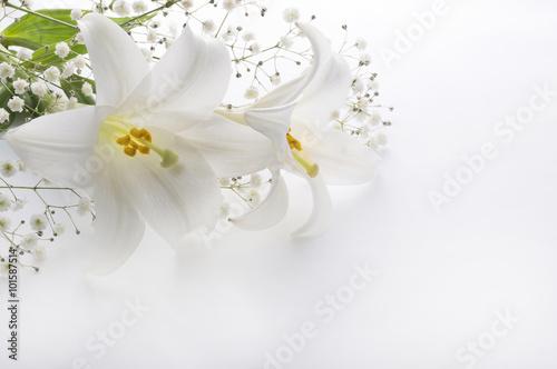 Naklejka na szafę Kwiat lilii