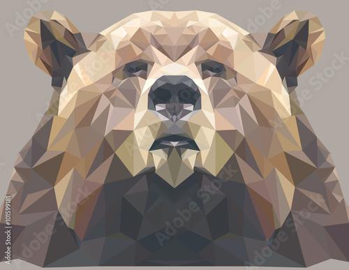 Fototapeta Brown bear portrait