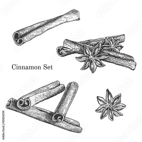 Cuadros en Lienzo Ink hand drawn cinnamon set
