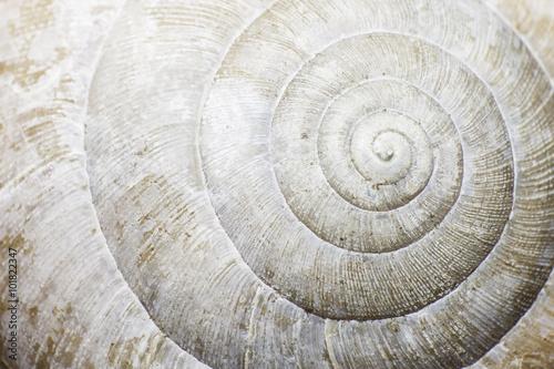 Fototapeta Macro of a snail shell