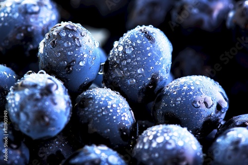 Canvas Print Ripe bunch of  blue grapes closeup with shining water drops