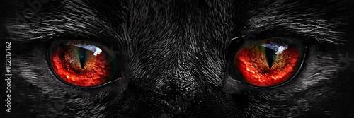 Fototapeta premium kudłaty potwór czerwone oczy zbliżenie