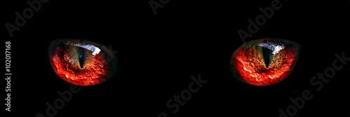 Obraz na plátně red monster night eyes closeup