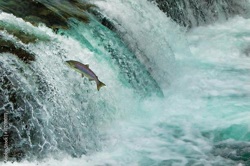 Carta da parati Salmon Jumping Waterfall Alaska