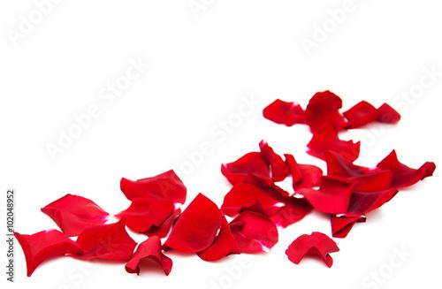 Photo Red roses petals
