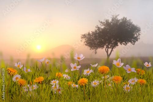 Fotografija Floral background