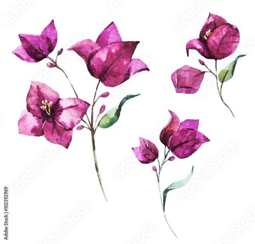 Fotomural Watercolor vector bougainvillea flowers