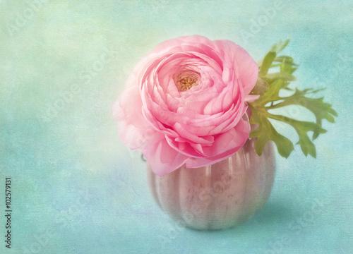Photo Pink ranunculus flower