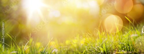 Obraz na plátně art abstract spring background or summer background with fresh g