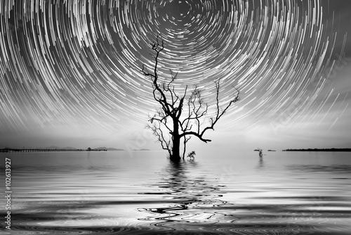 Samotne drzewo i ścieżka gwiazd do Twojego wnętrza.