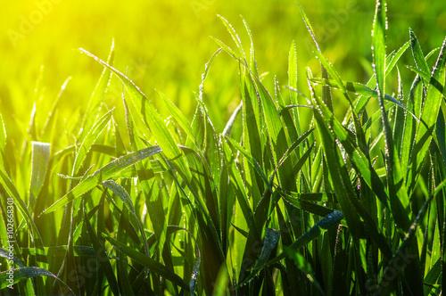 grass and sun light
