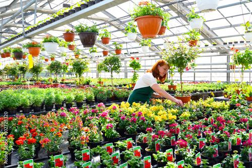 Obraz na plátne Gärtnerin arbeitet in einem Gewächshaus mit bunt blühenden Blumen - Gartencenter