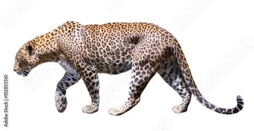 Wallpaper Mural Movement leopard