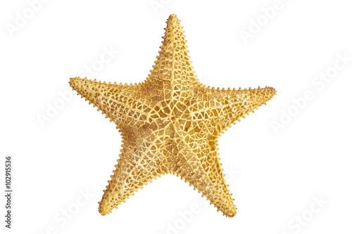 Obraz na plátně seastar starfish on a white background