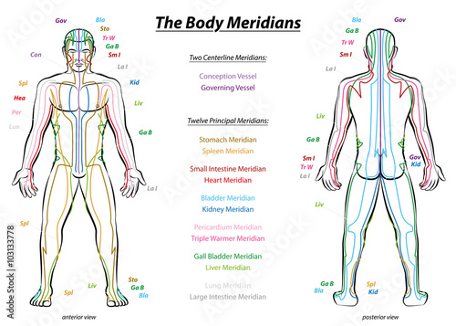 Photo Meridian System Chart - Male body with principal and centerline acupuncture meridians - anterior and posterior view - Traditional Chinese Medicine - Isolated vector illustration on white background