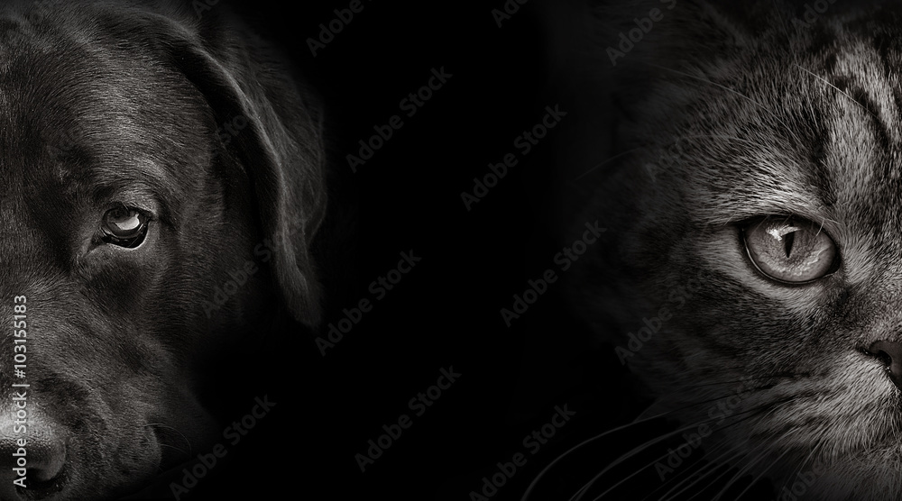 ciemny kaganiec labrador pies i kot szkocki <span>plik: #103155183 | autor: plus69</span>