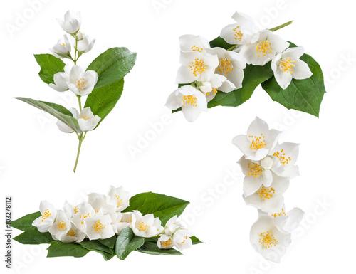 Canvas Print Set of jasmine flowers