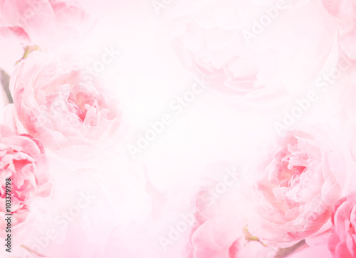 Canvas Print the sweet pink rose flowers for love romance background