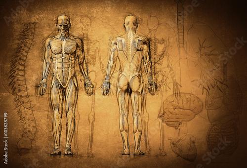 human anatomy drawing, old, canvas Fotobehang