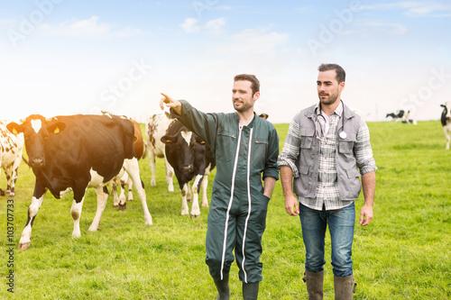 Fotografija Farmer and veterinary working together in a barn
