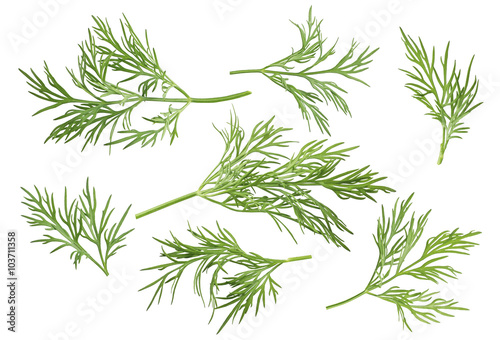 Photo Dill herb set options path included isolated on white background