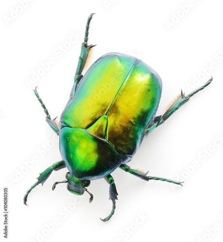 Photographie Green beetle on white.