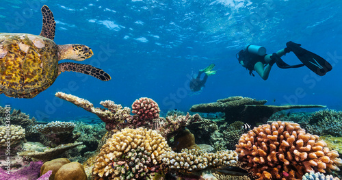 Canvas Print Scuba divers explore a coral reef