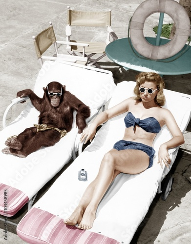 Fotomural Chimpanzee and a woman sunbathing