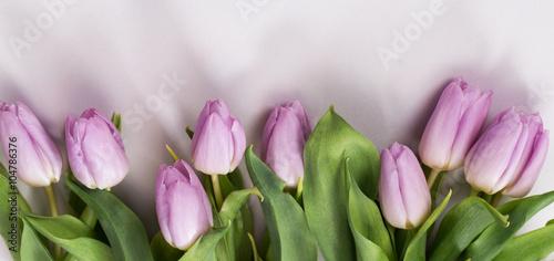 Wiosenny pastelowy bukiet liliowych tulipanów na białym tle