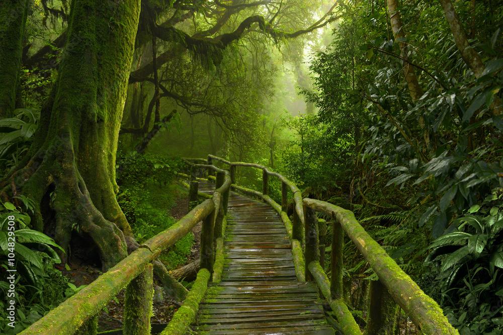 Fototapeta Nepal dżungla z drewnianym mostem