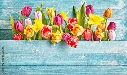 Photo Tulip border with copy space