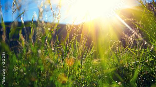 Fotografie, Obraz Beautiful nature landscape - Alpine meadow
