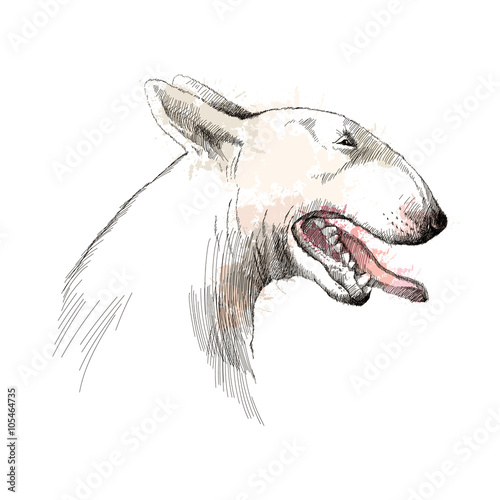 Leinwand Poster Vector sketch of Bull terrier dog head profile with open mouth isolated on white background with pastel blots
