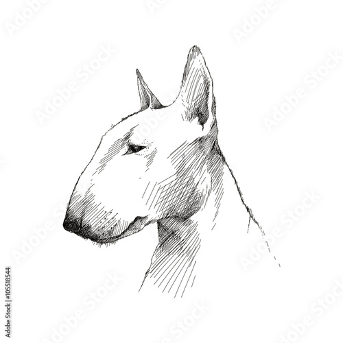 Billede på lærred Vector sketch of English Bull terrier dog head profile isolated on white background