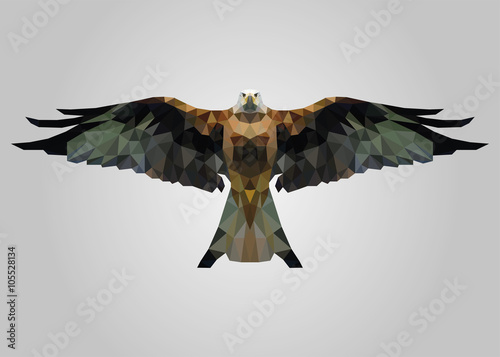 Fototapeta Eagle bird flying free with wide open wings and looking vector