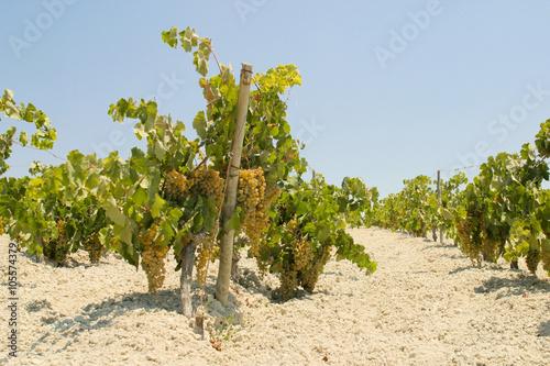 Fotografie, Obraz On the road from Sanlucar De Barrameda to Jerez  De La Frontera