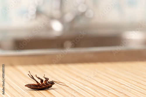 Dead cockroaches in an apartment house on the background of the