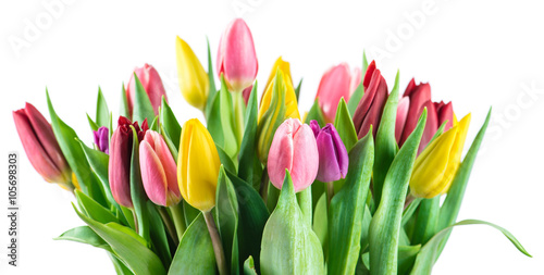 bouquet of tulips closeup, isolated on a white background