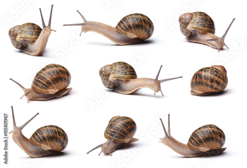 Collection of snails isolated on white background